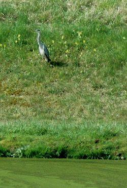 heron-lagune