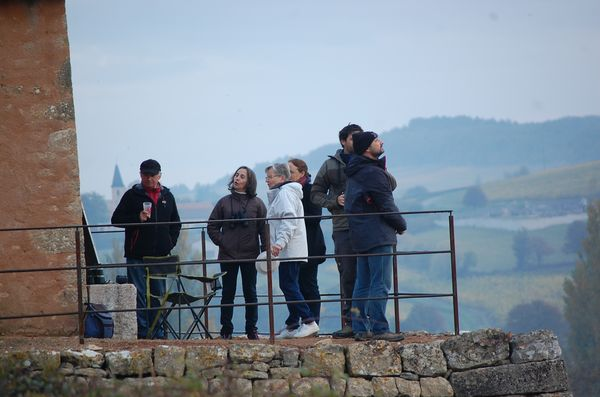 observation-oiseaux-migrateurs-6