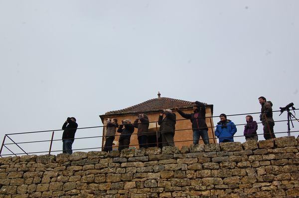 observation-oiseaux-migrateurs-8