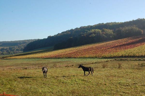 paysage-et-chevaux