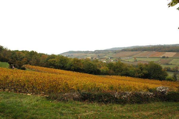 vignes-du-maynes